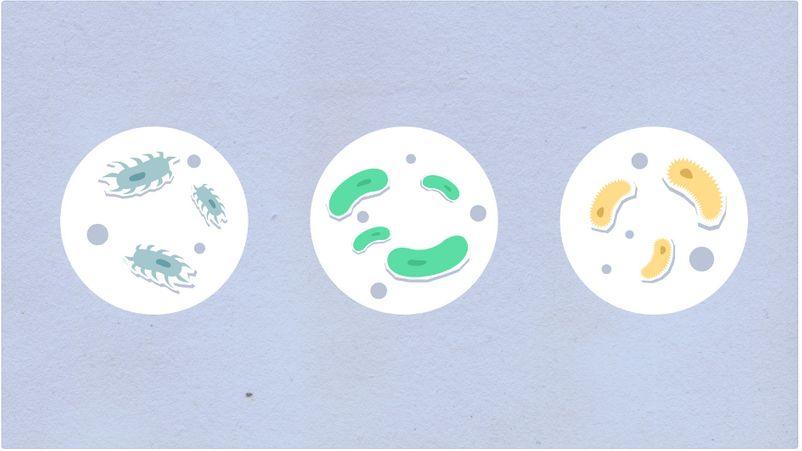 變異型鏈球菌